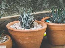 Quels sont les bienfaits de l'Aloe vera