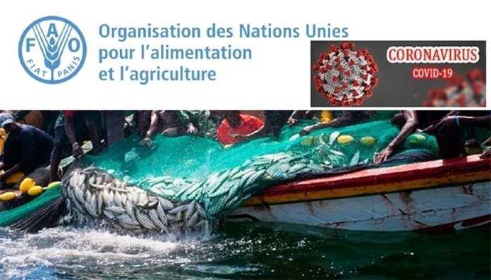 Le Covid-19 entraîne une baisse de 6,5 % des activités de pêche dans le monde, selon la FAO