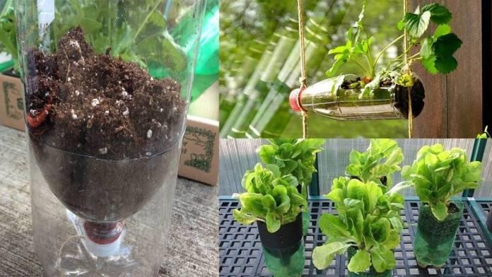 planter-dans-bouteille-plastique