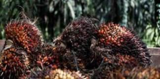 Qu-est-ce-que-l-huile-de-palme