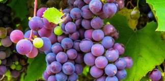 3 soins avec du raisin