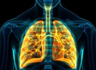 Covid-19 des faux poumons infectés par des chercheurs pour mieux étudier le virus