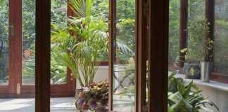 Quelles plantes faire pousser sous une véranda