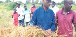 kolda-dakar-et-bissau-renforce-la-cooperation-dans-le-domaine-de-l-agriculture-ministre