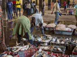 Ces pêcheurs sénégalais qui tombent au sol (reportage)