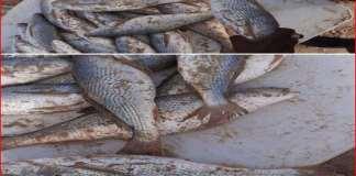 Capitaine - bienfaits de manger du poisson Capture