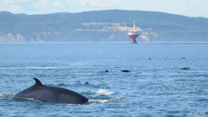 baleine www.kafunel.com Mer Une baleine en danger à Dakar