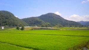 電車からの夏風景