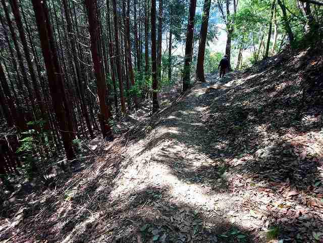 惣岳山からの下山道