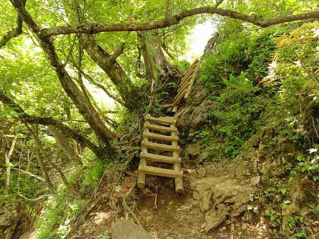 丹沢表尾根縦走ルートの烏尾山の先のハシゴ