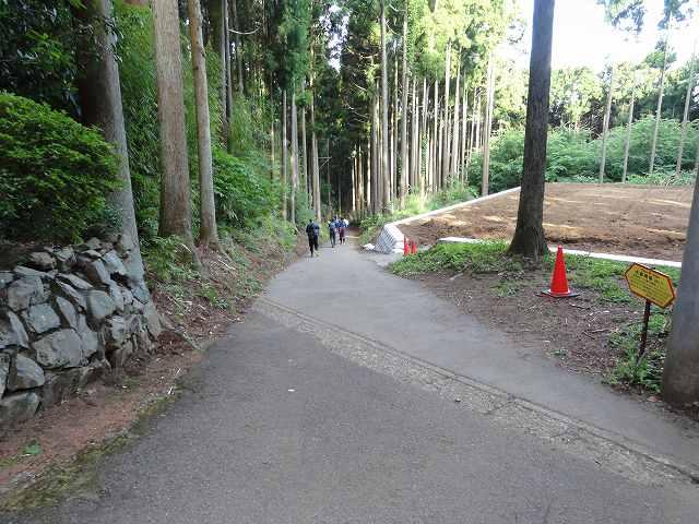 大倉尾根から降りたところの舗装路