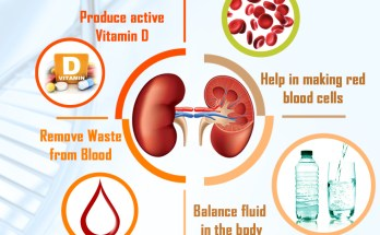 Kidneys play a very vital function in our overall body systems & helps maintaining good health.