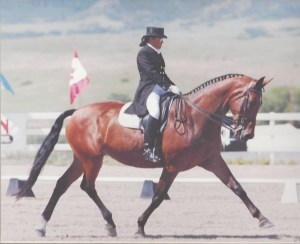 Moselle. Onwed by Kathy Mayhew. The first horse Gwen trained to FEI and showed in CDI's in 1995