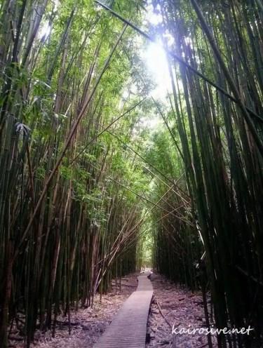 Bamboo Forest - Pipiwai Trail to Waimoku Falls - Hana, Maui