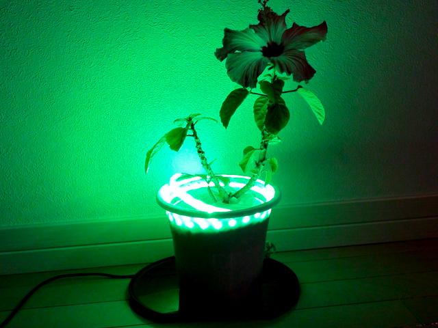 LEDテープライト【サンプル10】