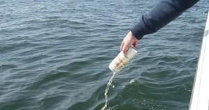 東京湾の散骨費用