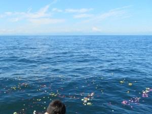 東京海洋散骨0120-009-352