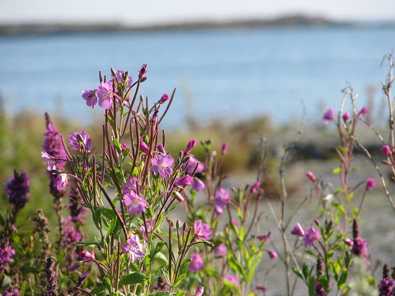 Blommor på Garkast