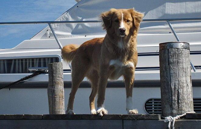 En supersöt hund på Mulö