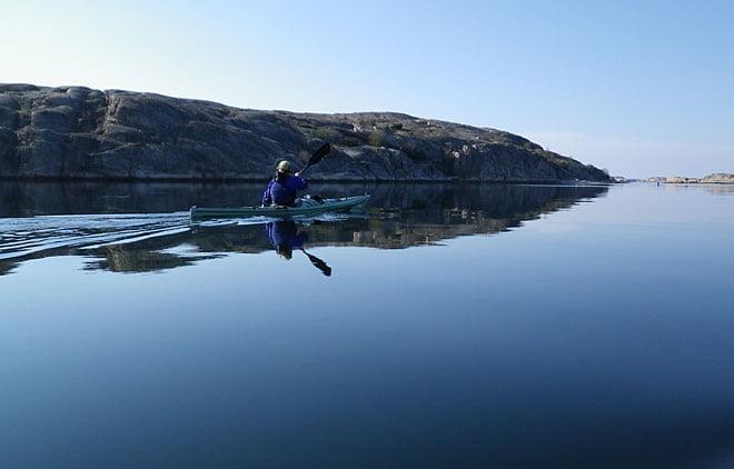 Finfin paddling på eftermiddagen