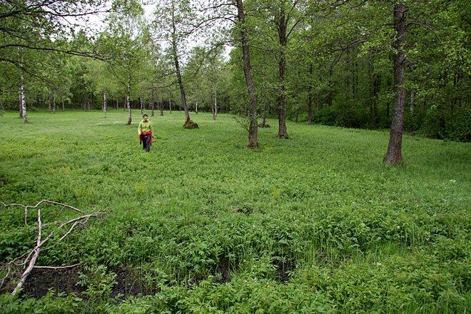 Mest grönt i mitten av maj