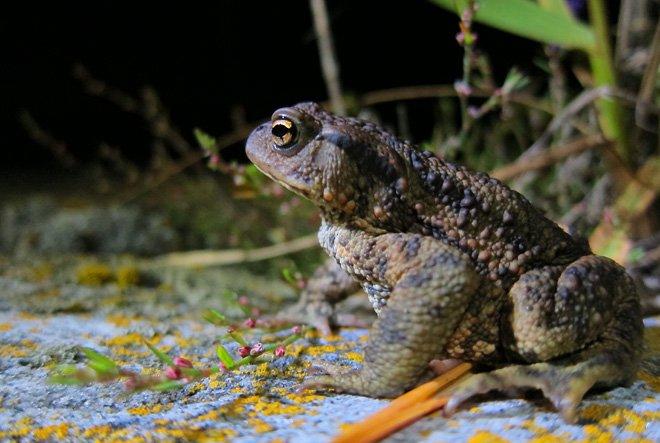 På gräsgrundet fanns det lite grodor som kröp fram på kvällskvisten