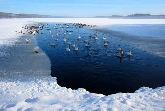 """Fåglarnas """"damm"""" i Rössjön har inte blivit så mycket mindre"""