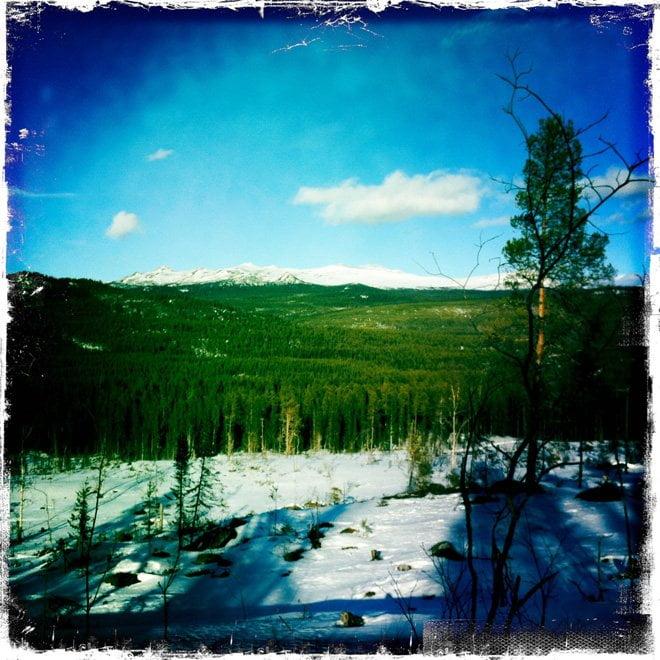 Massa skog oxå! :)