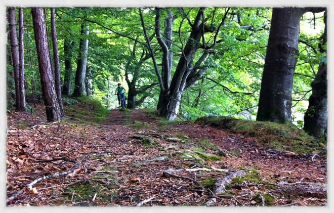 Mountainbike norr om Rössjön