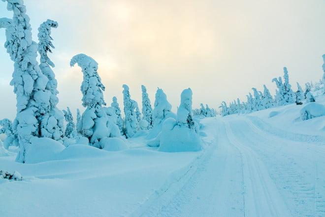Snögranar i vackraste vitt
