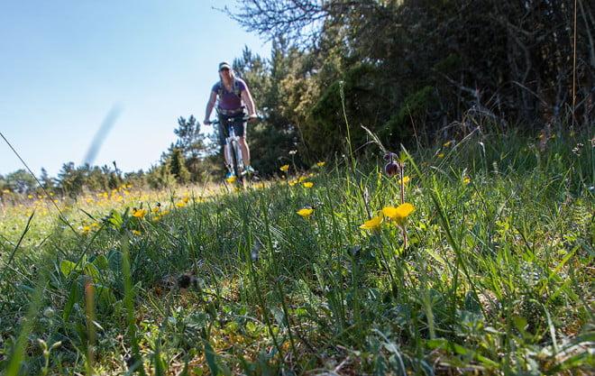 Finfin cykling bland blommande stigar och ängar