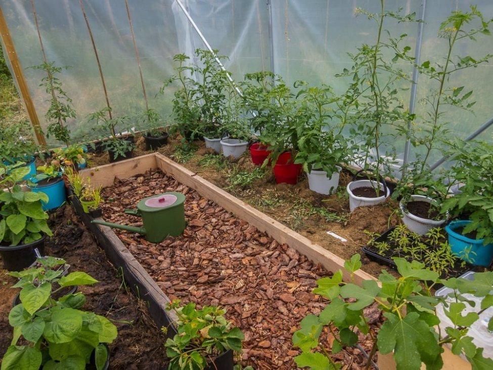Gott om tomater inne i en av Odlingstunnlarna