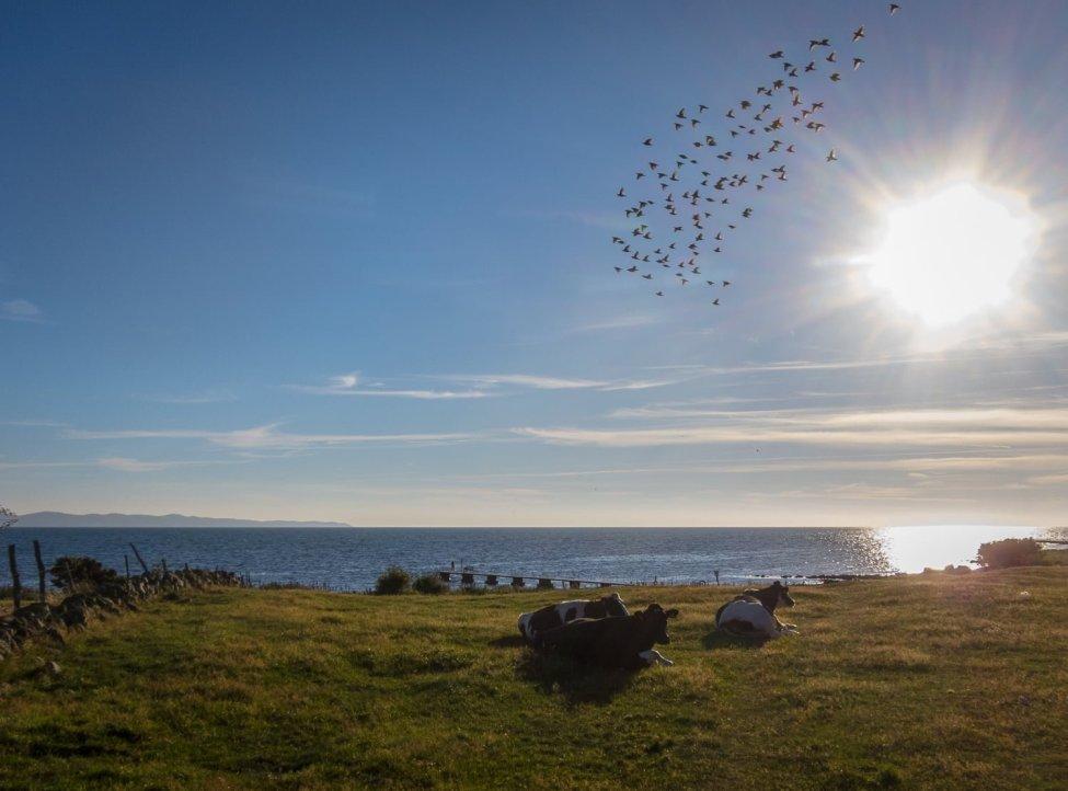 Fler fåglar och kor än tvåbenta käraduare som sällskap ;)