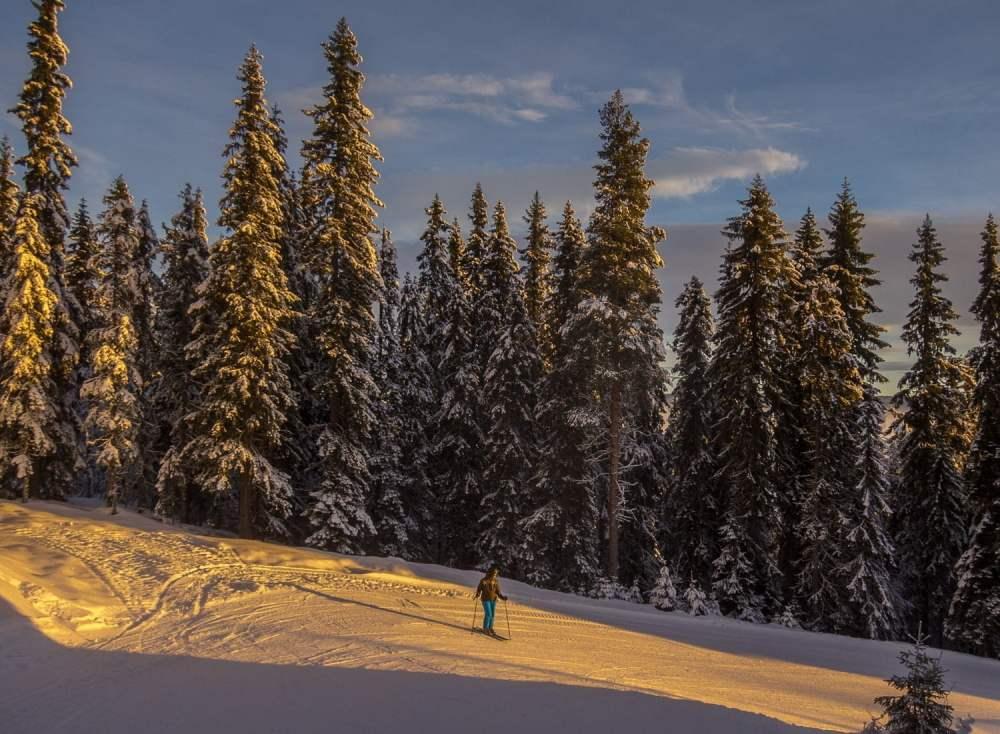 Morgonljus mellan snöiga granar på väg ner mot Högegga