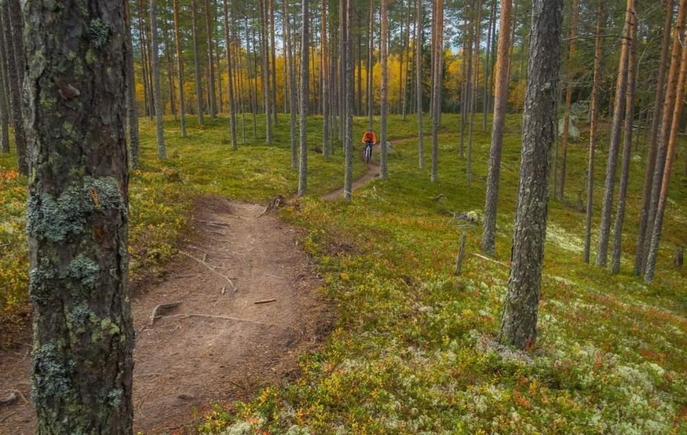 Gles tallskogscykling på finfina stigar i Rörbäcksnäs