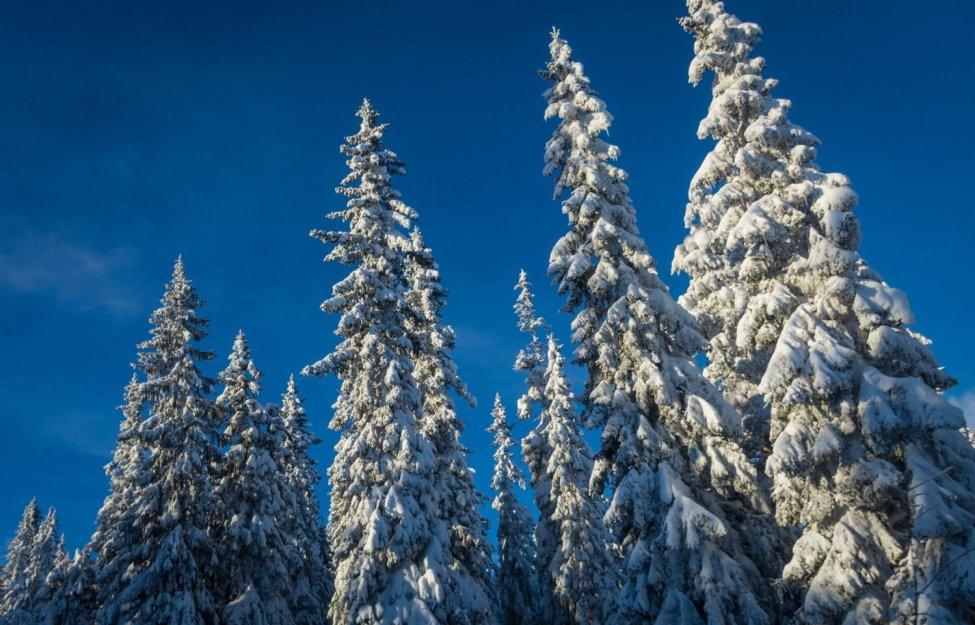 Snötyngda