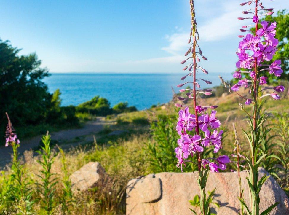 Blommar på landbacken