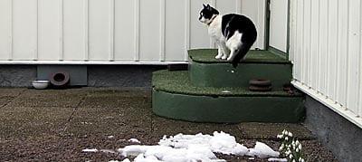 Nisse vågar inte komma in i bygglokalen, men han vaktar utsidan ;-)