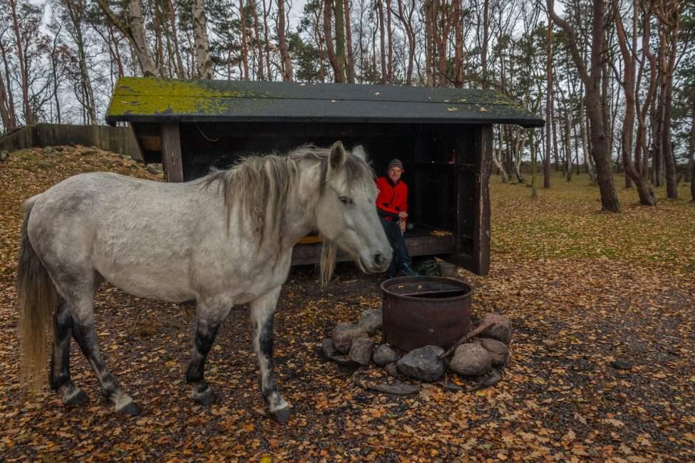 Nyfikna hästar
