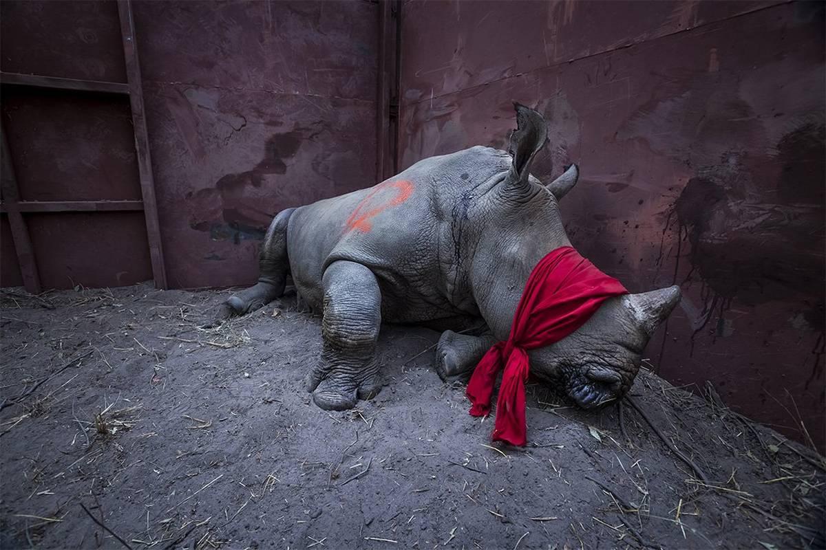 Световният конкурс World Press Photo и тази година представи водещи