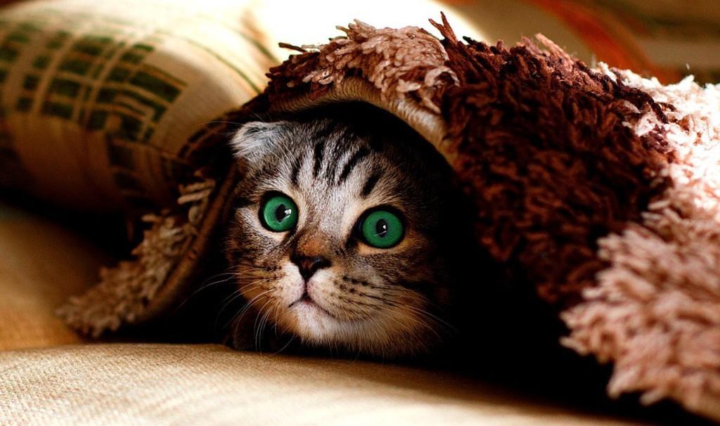 Снимка: Вие имате какво да криете