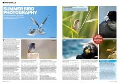 Bird Watching 08.2013-Summer bird photography article-www.kaleelzibe.com
