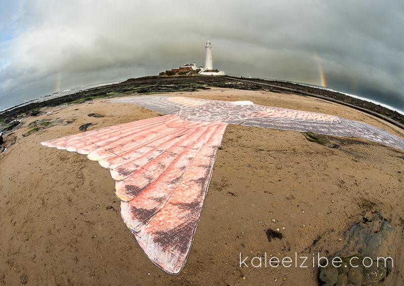 _ND41976 Red kite mosaic-Saint Mary's Lighthouse-KaleelZibe.com