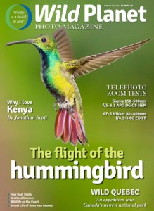 July 2014 cover - my green-breasted mango hummer!