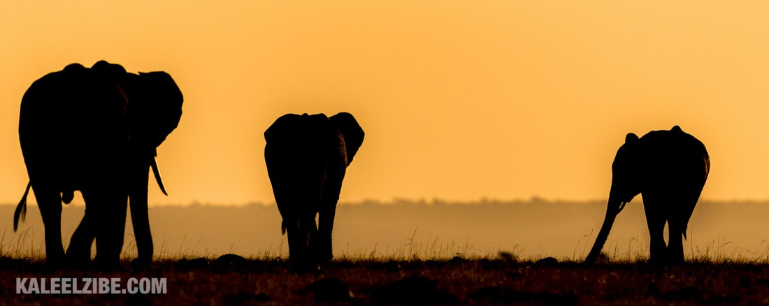 20150821-_D8E0099-Elephants into the sunset-Kenya-KaleelZibe.com