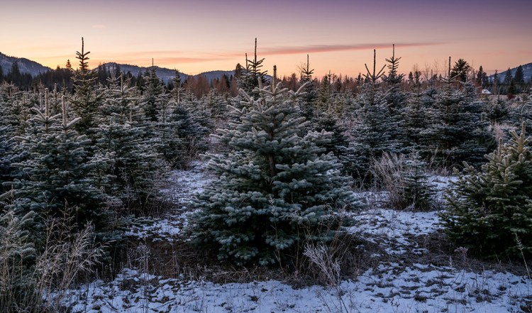 Highland Flats 樹木農場