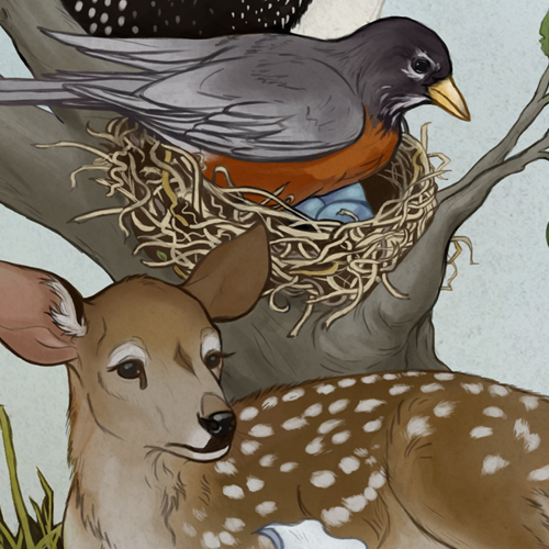 Detail of Ontario Nature's 85th anniversary timeline illustration by Kaleigh Bulford.
