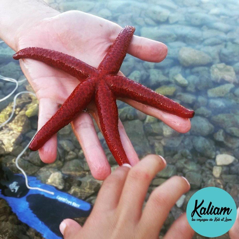 Étoile de mer en Croatie pêché par Mathieu