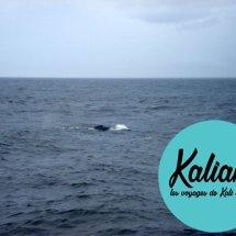 usa-baleine-cape-code-02