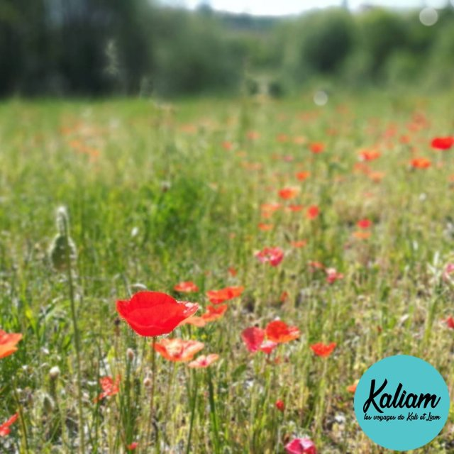 Pendant la balade  vlo fleur nature balade honor8 kaliamvoyageshellip